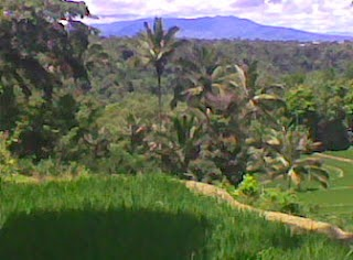 tomohon ricefield tracking tour
