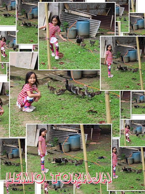 main bersama bebek
