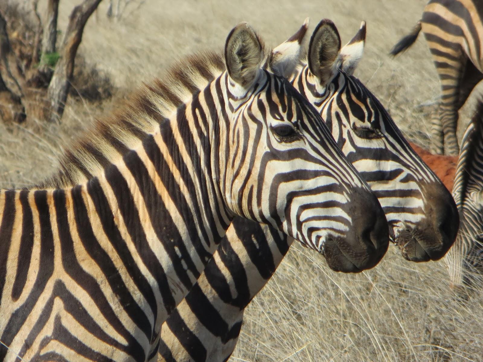 Aeroporto Kenya : Thomas tours & safaris with thomas mboya: in kenya fai da te con i