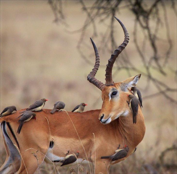 inan%25C4%25B1lmaz+hayvan+resimleri20 İnanılmaz hayvan resimleri vahşi hayat.