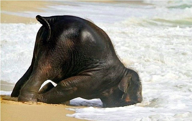 baby elephant, ocean, water, so cute