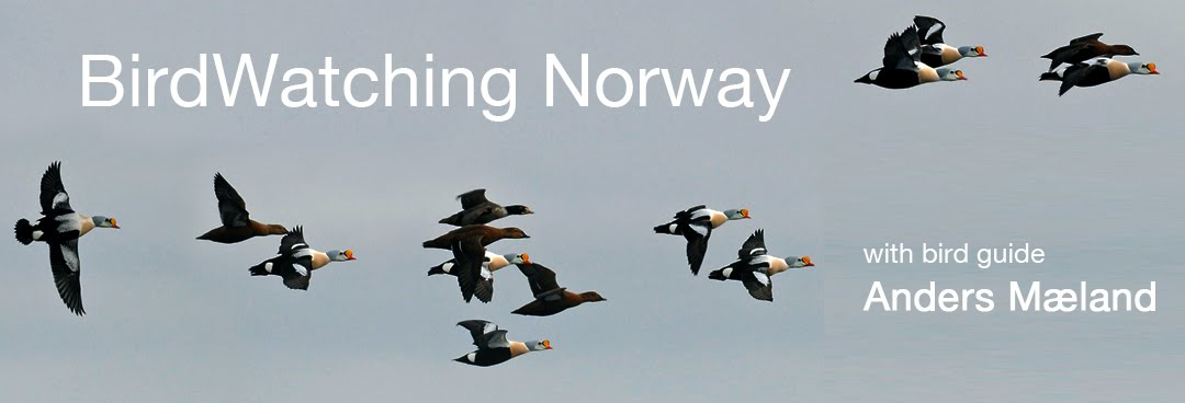 BirdWatching Norway