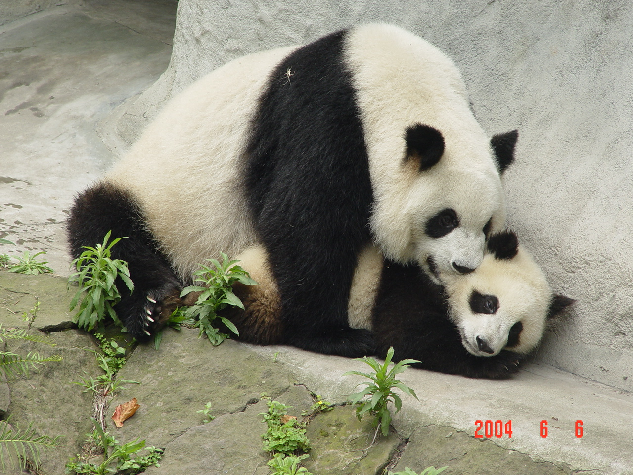 Encyclopaedia of Babies of Beautiful Wild Animals: Giant ...