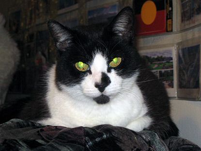 Elderly cat Katie is looking for a new home