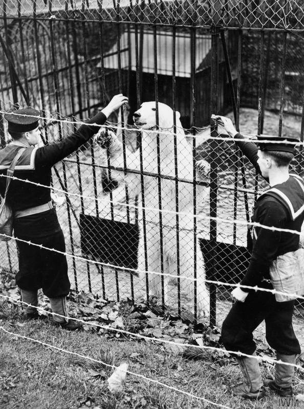 Bear at Whale Island zoo before the war