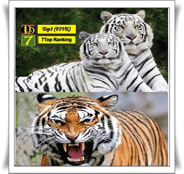 Harimau benggala~Panthera tigris bengalensis