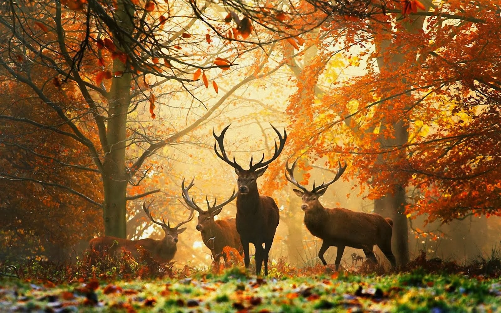 Elks in the autumn forest