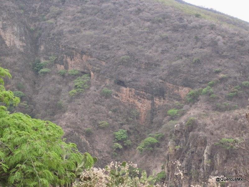 Cueva de los murciélagos desde la Sierra del Tecuán También se pueden ver desde el Sendero La Angostura