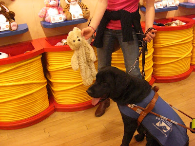 Picture of Al (Rudy's brother) in a sit-stay in harness/coat, I'm holding up a stuffie from