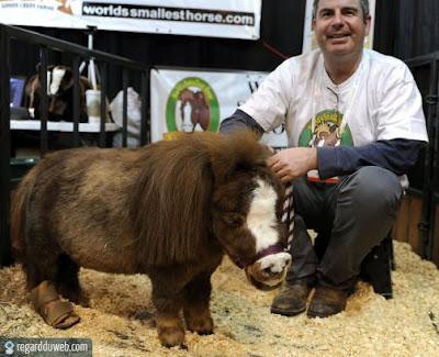 Images drôles et insolites catégorie Animal - Cheval v7