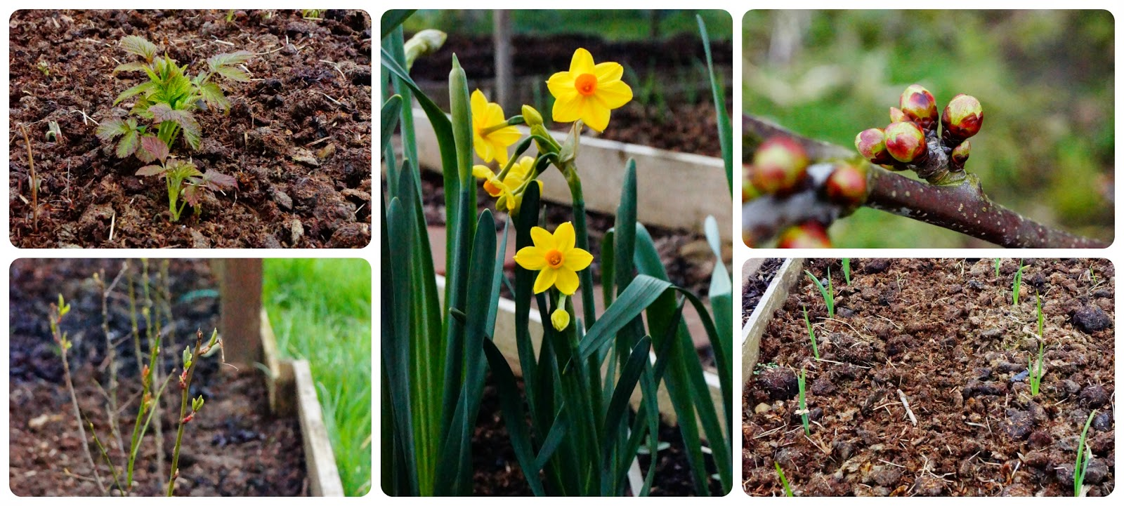 The joys of Spring awakenings - 'growourown.blogspot.com' ~ an allotment blog