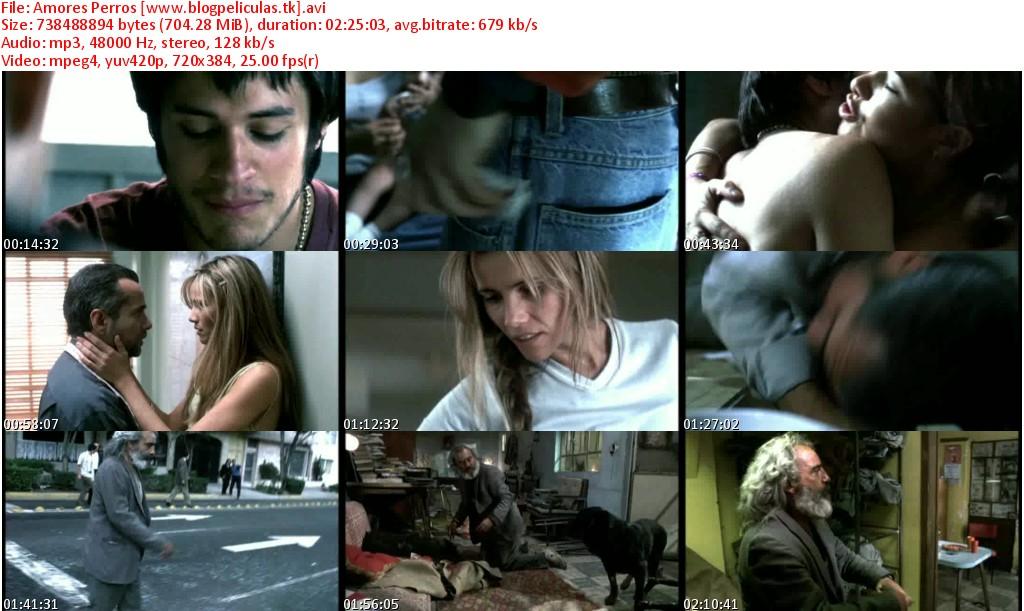amore perros. amores perros dvd