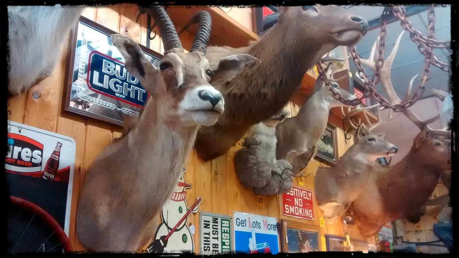 Taxidermy in Wallace, Idaho