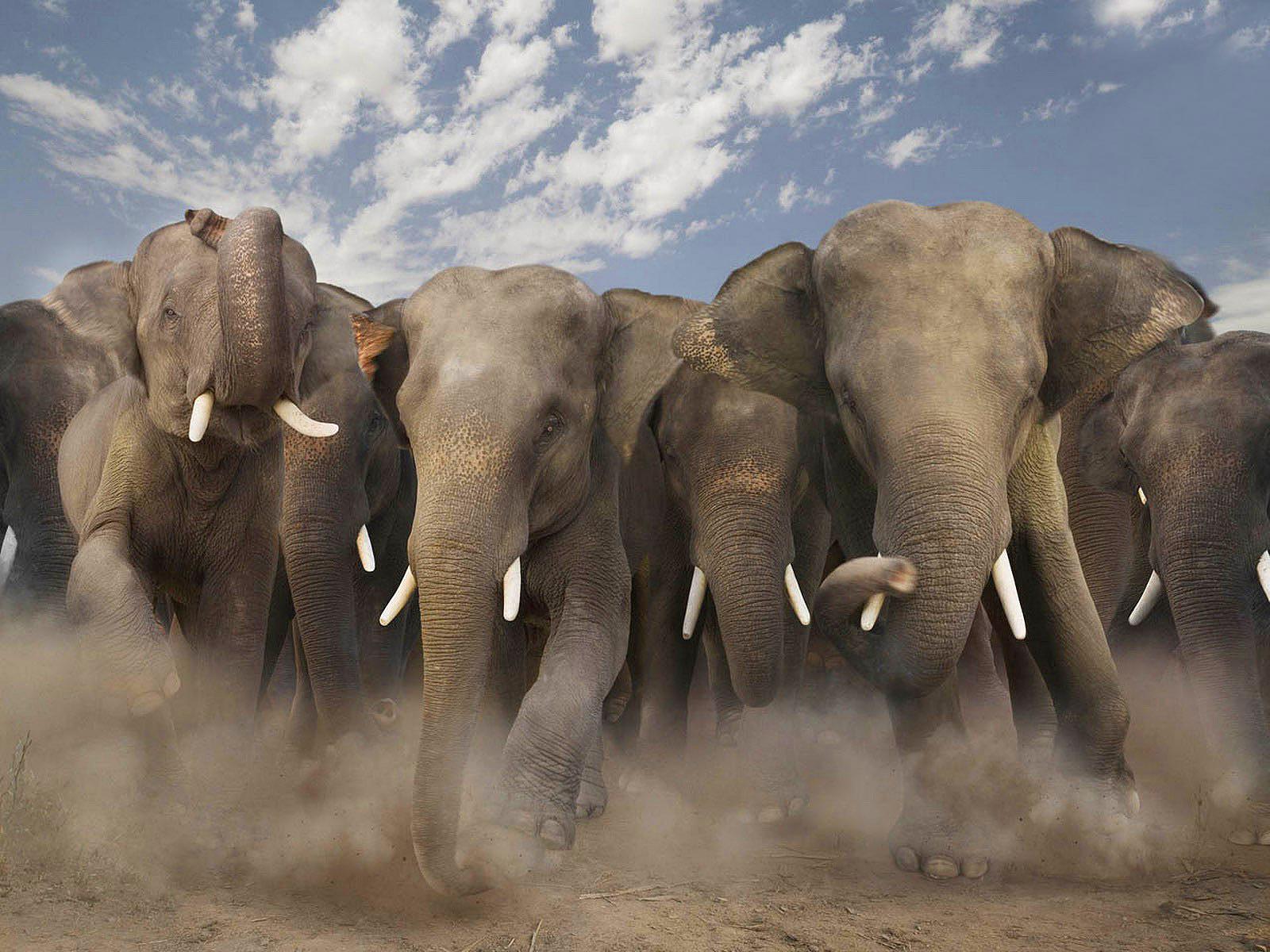 olifanten achtergronden bureaublad - photo #17