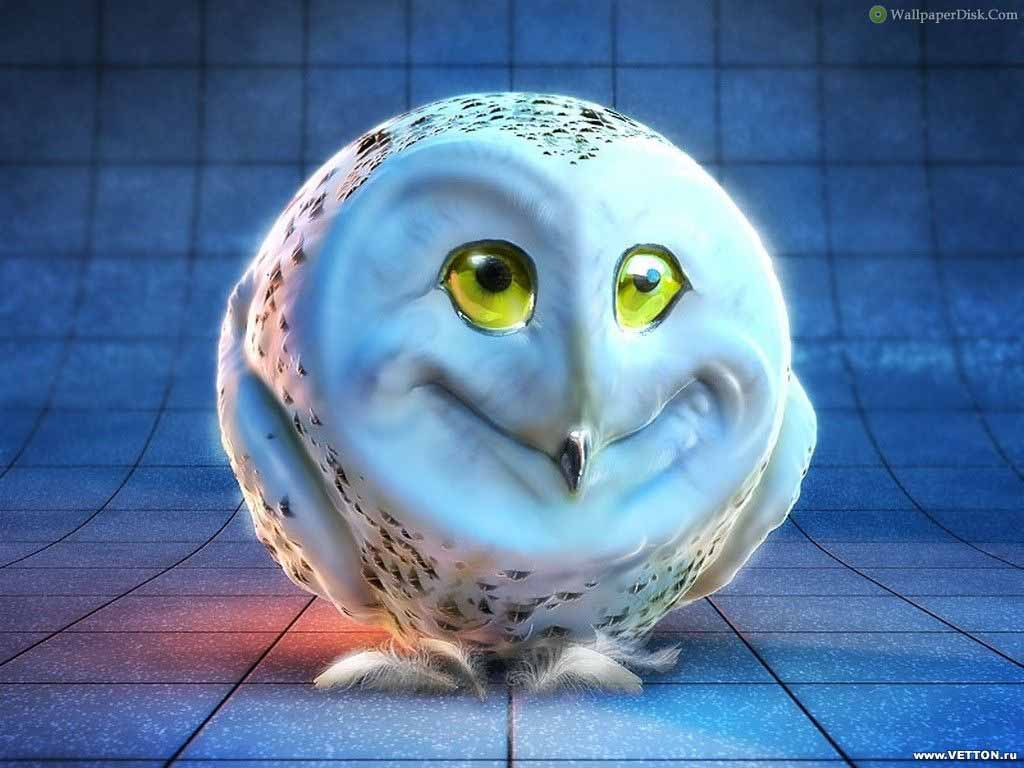 Beautiful   Wallpaper Home Screen Owl - 3d+Wallpapers+Background13  Collection_909126.jpg