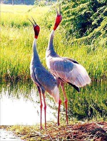 Saputara (Best Honeymoon Destinations In India) 5