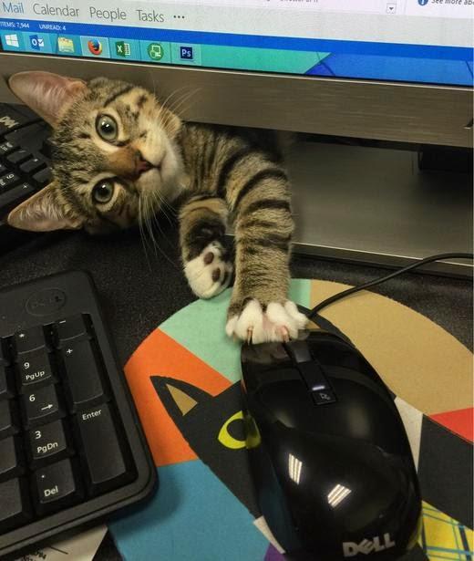 Это и есть та мышка, которую я должен ловить?