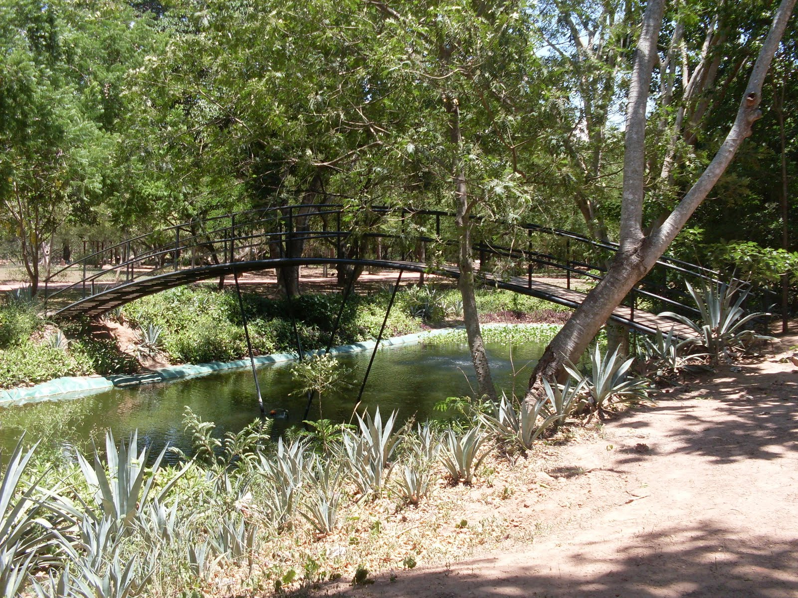 jardin botanico 2011