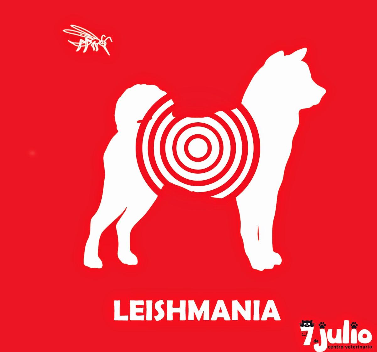 Leishmaniosis, conoce todo sobre esta enfermedad tan grave.