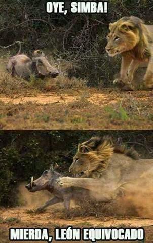Oye, Simba