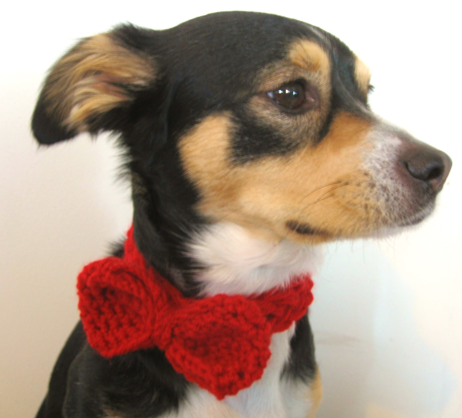 Megan e sass handknits free pattern crochet dog bow tie todays pattern is a crochet pattern not a knit pattern although its very easy to knit a dog bow tie as well doesnt my pup roscoe look dashing in bankloansurffo Choice Image