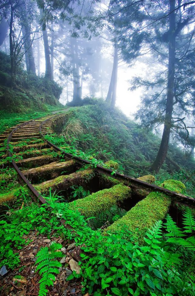 Abandoned Railroad Tracks In The Taipingshan National Forest Taiwan
