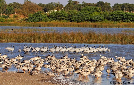 Magadi Bird Sanctuary