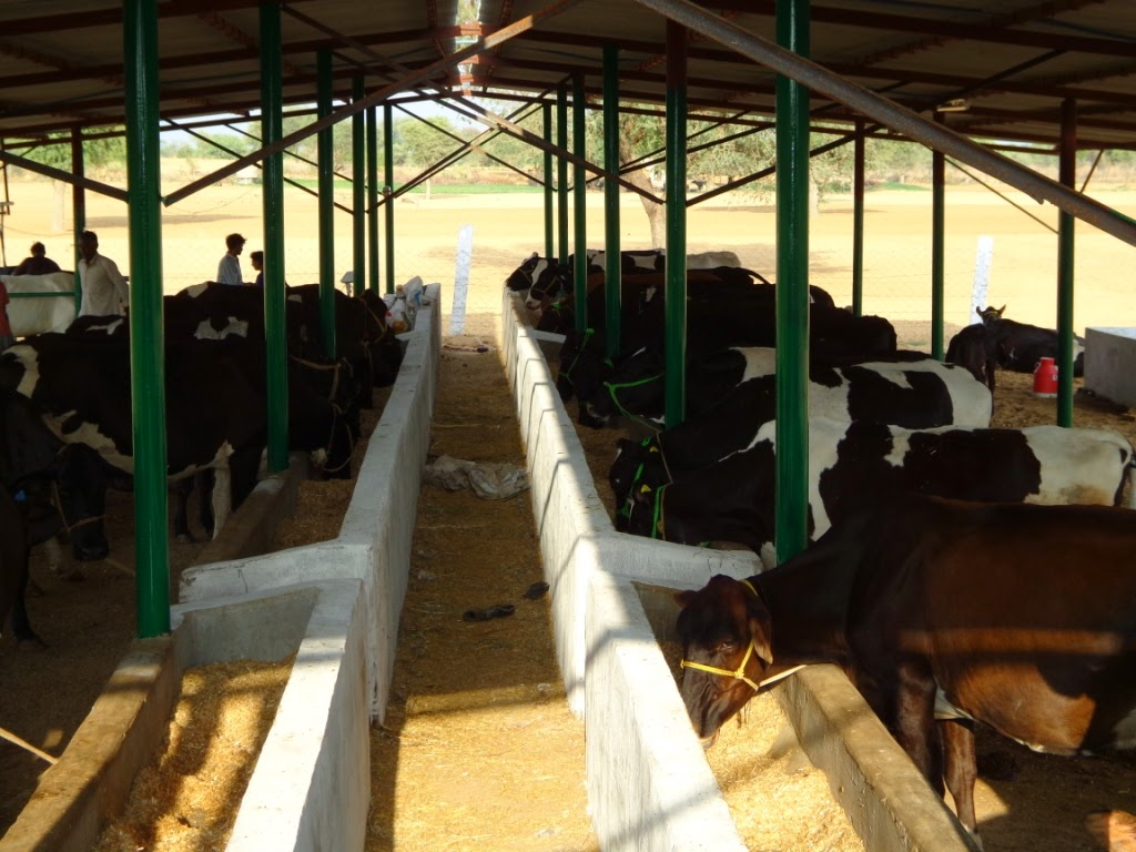 Maa dairy farm