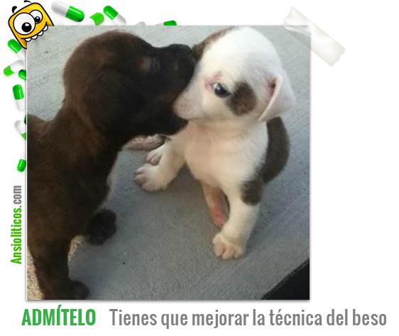 Chiste de Perros: Mejorar la técnica del beso