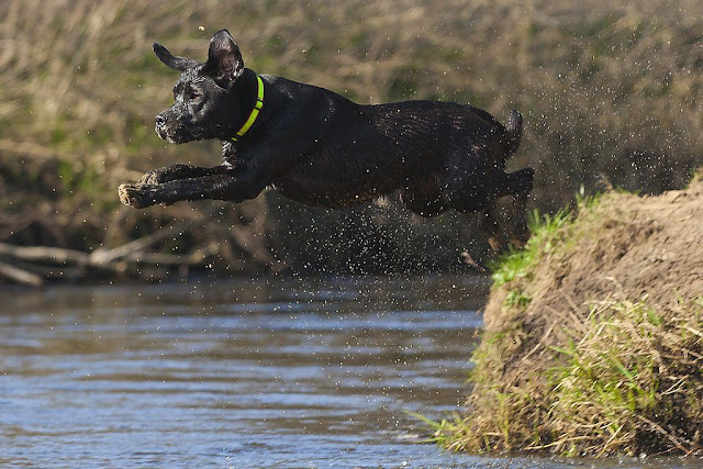 Dog floating above water