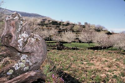 http://1.bp.blogspot.com/-W3EQ36_M2_8/UUhJhC9AGZI/AAAAAAAAEE0/a3YAG9gt3Cs/s1600/Floraci%C3%B3n+Valle+del+Jertebaja.jpg