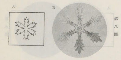『雪華図説』の研究 模写図と顕微鏡写真と比較 第八図