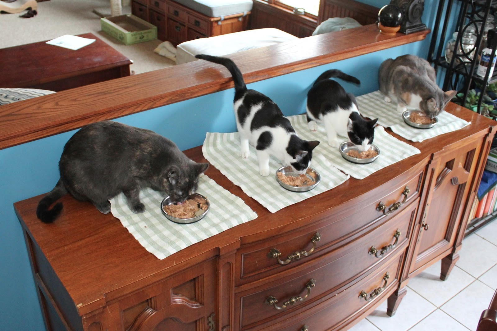 The cat suspects lined up and eating dinner