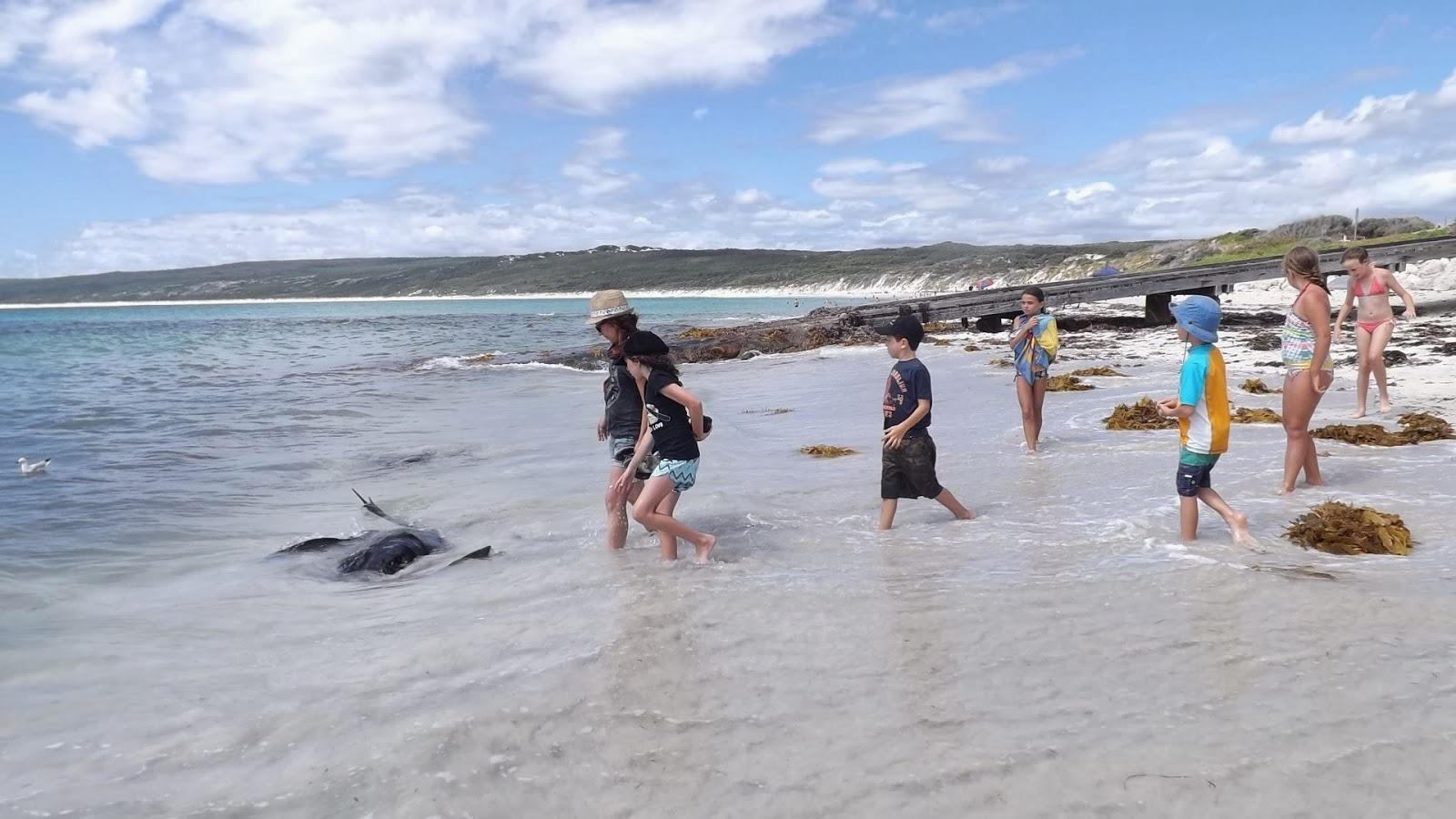 Wild stingray experience marred by reef fish decline