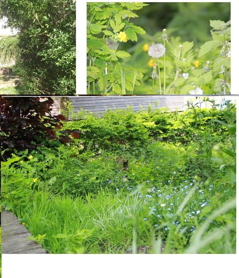 Milieu tuin Den Haag is verhuist