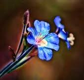 Y de repente, una flor...