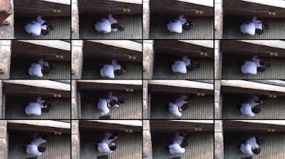 Video Bokep Indo Ngentot Dibalik Tembok Sekolah