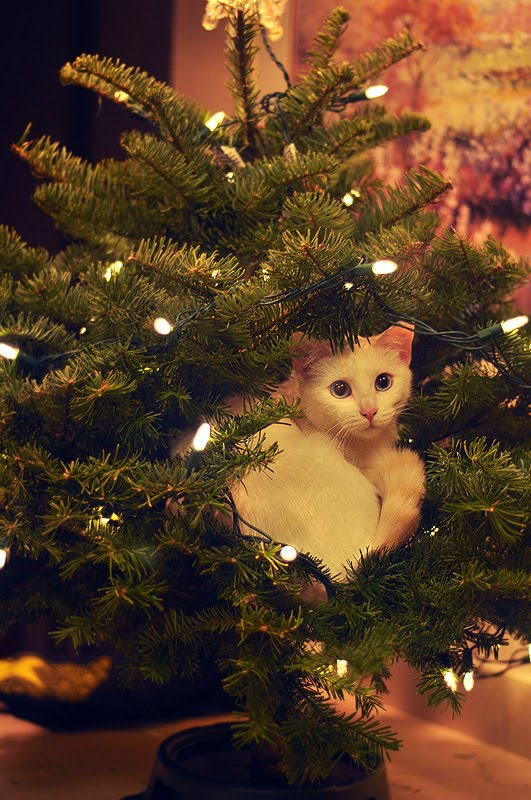 kitty_tree.jpg