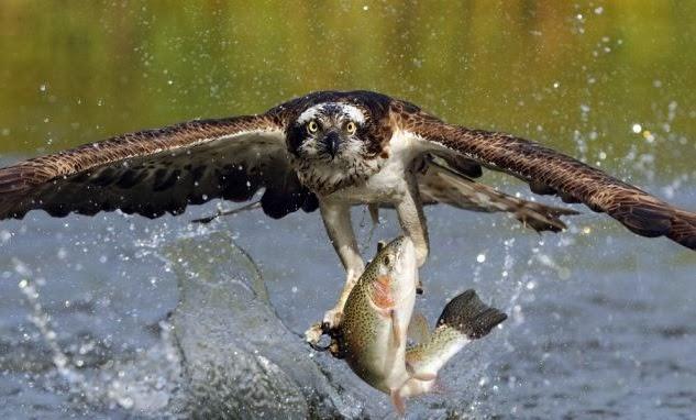 kartal avı