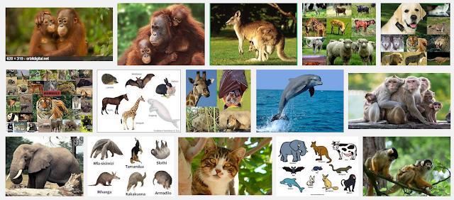 mammalian, mammalia, mammalian diving reflex, mammalian cell culture, mammalia definition, mammalian brain, mammalian cells, mammalian physiology, mammalia class, mammalia characteristics, mammalia definition, mammalia characteristics, mammalia class, mammalia orders, mamalila coat, mammalia animals, mammalia classification, mammalia examples, mammalia phylum, mammalia meaning, mamalia adalah, mamalia air, mamalia achrafieh number, mamalia artinya, mammalia animals, mamalia asiatis, mamalia air adalah, mamalia air tawar, mamalila all weather jacket, mamalia air yang melahirkan, mammalian heart, diagram of a mamalian skin, structure of a mamalian heart, diagram of a mamalian heart, diagram of a mamalian eye, diagram of a mamalian ear, diagram of mammalian kidney, mamalia bertelur, mamalia berkantung adalah, mamalia bernapas menggunakan, mamalia berkembang biak dengan cara, mammalia beirut, mamalia berkantung, mamalia besar, mamalia berplasenta, mamalia bernapas dengan apa, mamalila babywearing coat, mammalia class, mammalia characteristics, mamalila coat, mammalia classification, mammalia characteristics list, mammalia cladogram, mammalia cactus, mammalia class definition, mammalia class examples, mammatus clouds, mammalia definition, mammalia definition biology, mammalia define, mamalia darat, mamalia di air, mamalia di laut, mamalia di indonesia bagian barat, mammalia description, mammalia defining characteristics, mamalia dipelihara feline, mammalia examples, mammalia etymology, mammalian evolution, mamalia endemik sulawesi, mamalia eksotik, mamalia endemik di jawa barat, mamalia endemik maluku utara, examples of mammalia, mamalia endemik sumatera, mamalia eutheria adalah, e.explore mamalia, foto mamalia, fisiologi mamalia, fakta mamalia, mammalia family, fosil mamalia, filogeni mamalia, fakta mamalia purba, foto mamalia purba, jenis fauna mamalia, kaskus forum mamalia, mamalia gajah, mamalia golongan antechinus, mammalian gland, mamalia gurun, mamalia ganas, mama