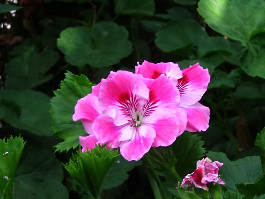 Fragancia de tu dulce jardín