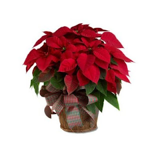 Send a Poinsettia Plant for the Holidays