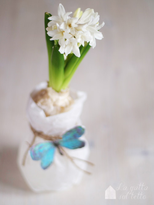 fioritura giacinti in casa