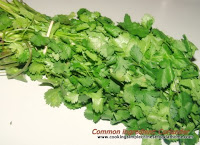 Chinese cooking ingredient coriander leaves cilantro and coriander