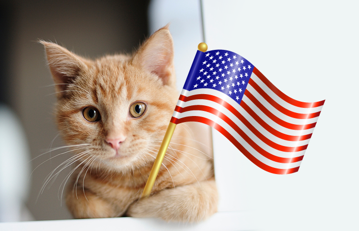 memorial day cat photos