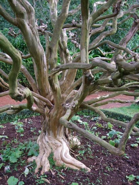 Madeira - Quinta do Palheiro Ferreiro