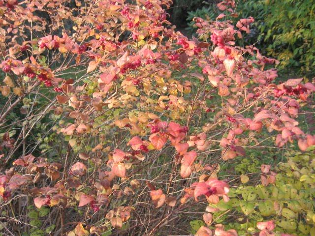 Altes und neues von bernd nowack dessau bl tter farbenpracht im november - Garten baum fallen ...