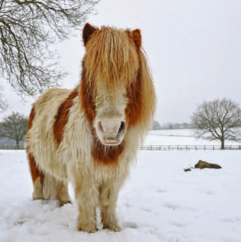 piglet christmas cards from the horse trust - Animal Charity Christmas Cards