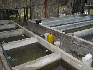 Mvm productores de carassius el criadero for Piletas de peces