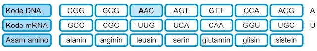 Duplikasi nukleotida